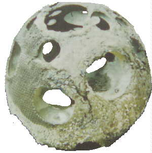Photo Of Textured Bay Ball