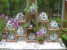 Models Used As Orchid	Pots